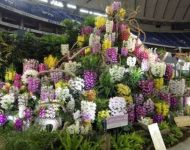 Japan Orchid Booth