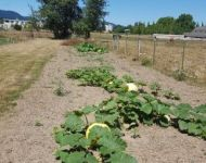 Giant Watermelon and Pumpkin Patches