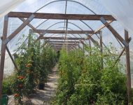 Controlled Trials Hoop House