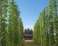 Hops at Agrarian Ales
