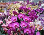 Customer Orchid Greenhouse